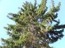 fs_p037_0_59.jpg - thumbnail